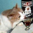 [CAT]CplSlade