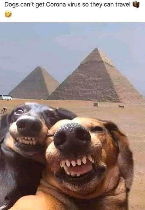 dogs-cant-get-corona-virus-travel-selfie-pyramids.jpg.7bb4c2d0d491221e69fde0a543671d9b.jpg
